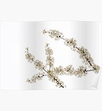 White Filigree of Spring Poster