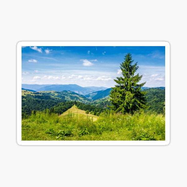 spruce tree on the edge of e hill Sticker