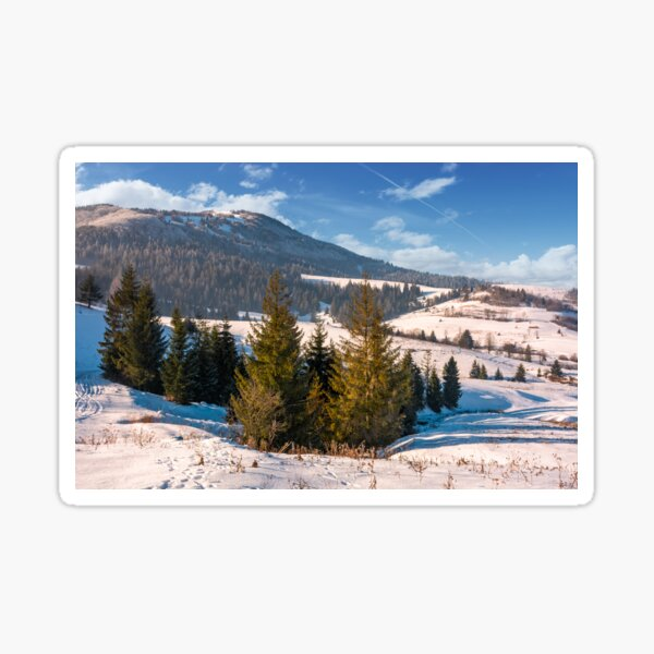 beautiful countryside with conifer forest Sticker