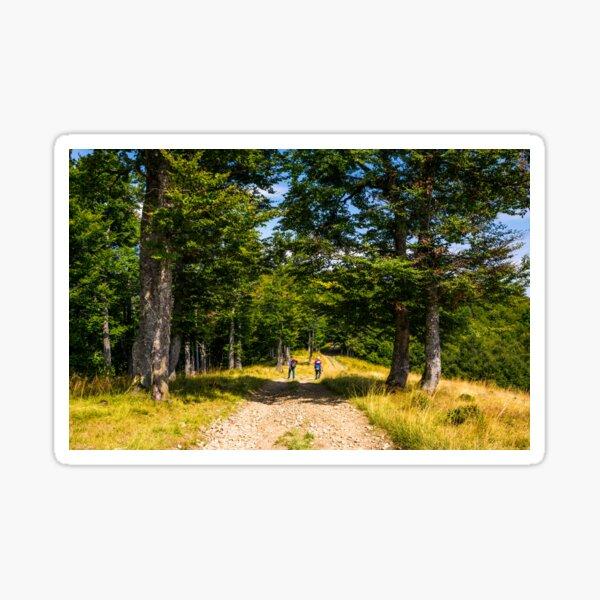 tourists on a dirt road through beech forest Sticker