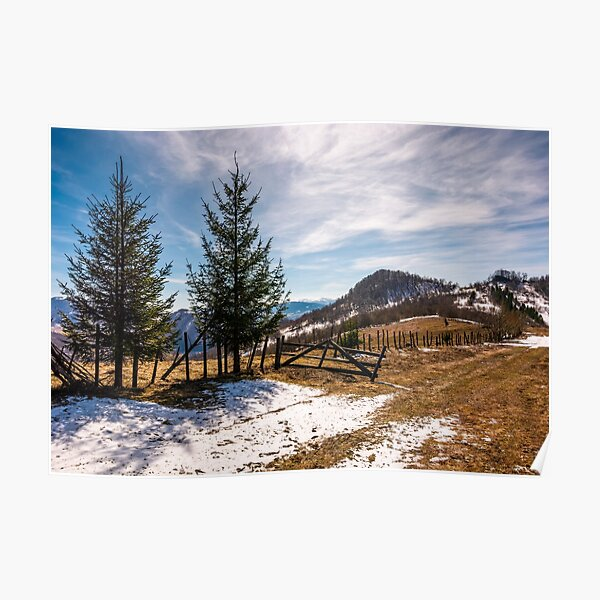 spruce trees near the fence on hillside Poster