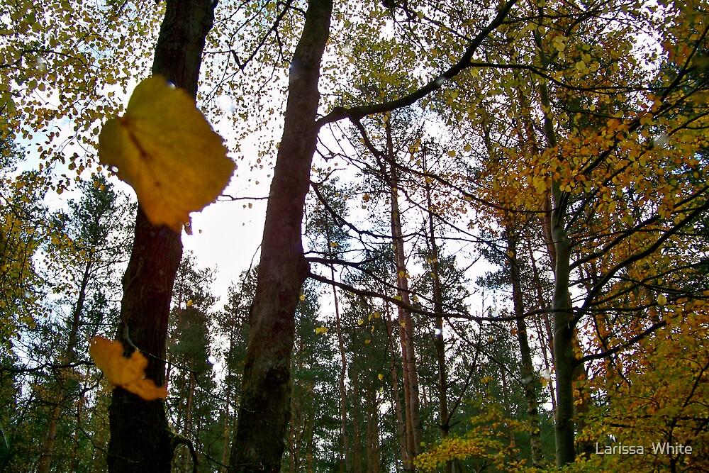 Falling Leaves by Larissa  Plain