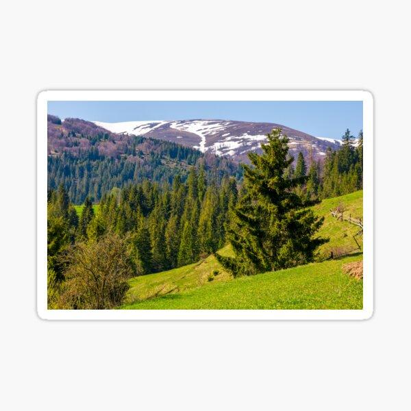 spruce trees on grassy hillside Sticker