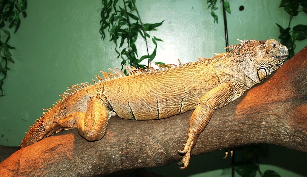 Lizard 1 by Jessie-Kay