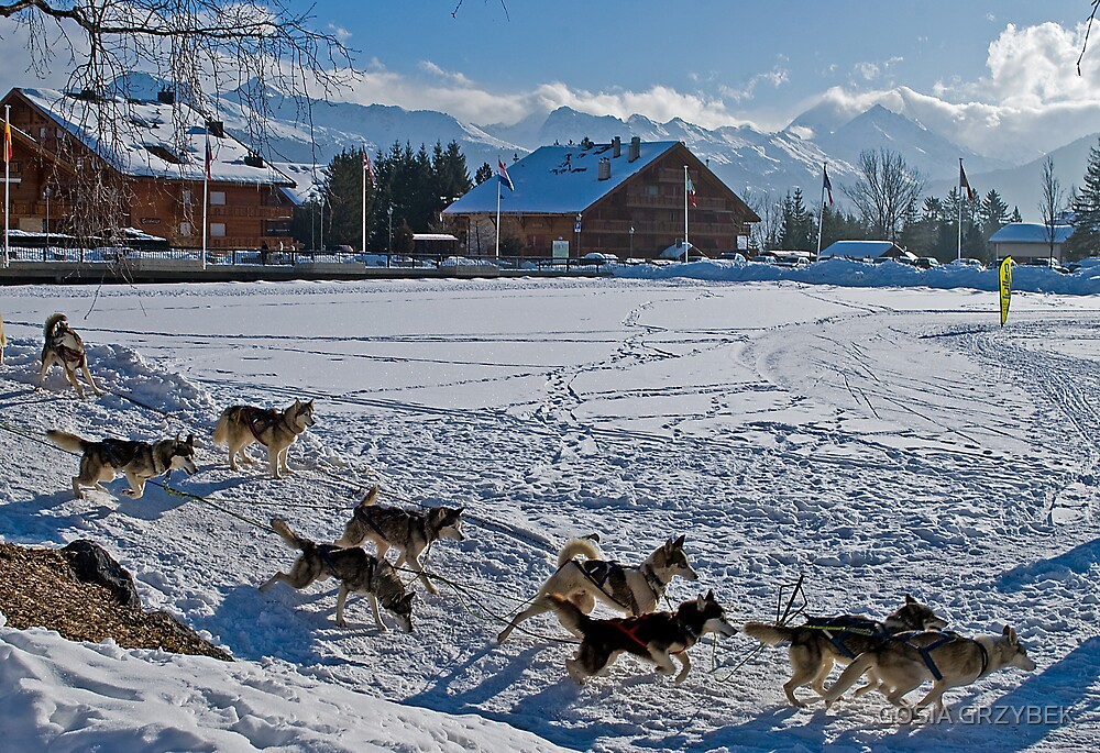 Dogs on the lake  de la Moubra -Crans  ( Swiss) by GOSIA GRZYBEK