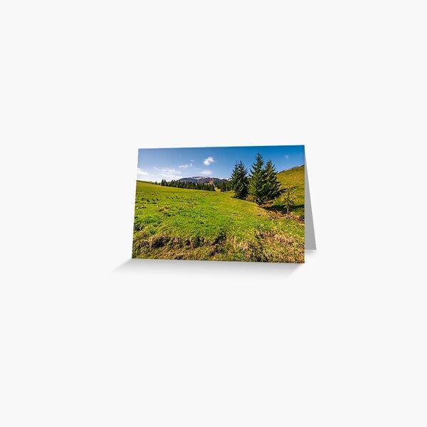 spruce trees on grassy hillside Greeting Card