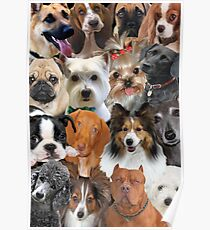 Dog Collage Design For Popular Dog Breeds Poster