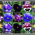 Little Beauties Collage in Mirrored Frame  by BlueMoonRose