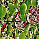 Sparrows by Laura S