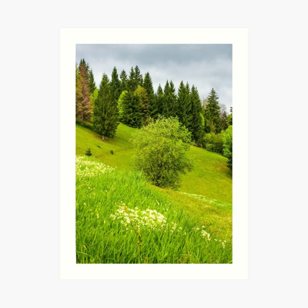 forest on grassy hillside in springtime Art Print