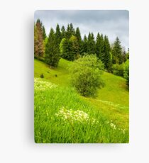 forest on grassy hillside in springtime Canvas Print