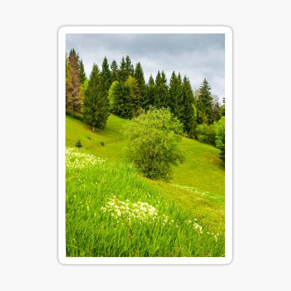 forest on grassy hillside in springtime Sticker