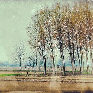 Poplars by sil63