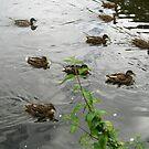 Ducks in Formation von BlueMoonRose