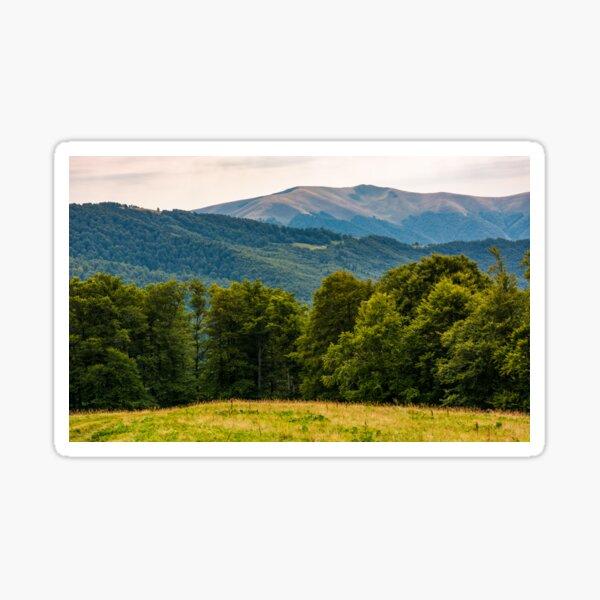 grassy meadow on forested hillside of Carpathians Sticker