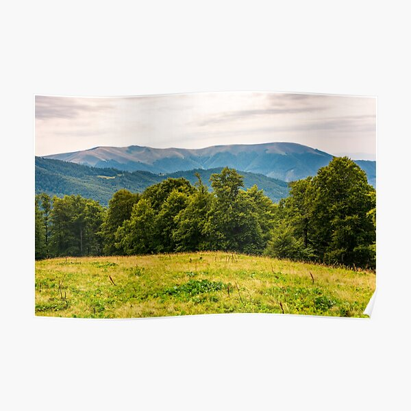 grassy meadow on forested hillside of Carpathians Poster