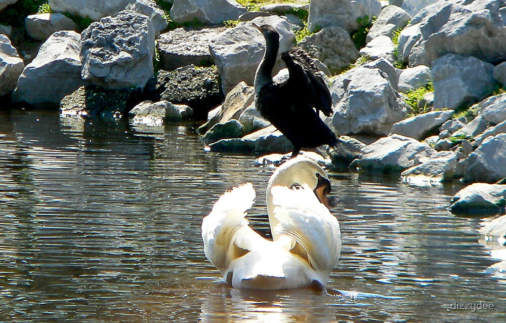Swan by dizzydee
