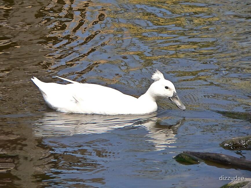 Duck by dizzydee