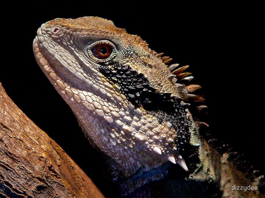reptile by dizzydee