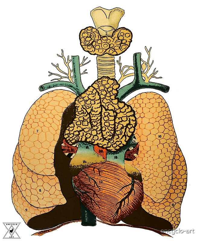 Human Lung Anatomy | Science Physiology Illustration"|666|800|?|f145d8d66122d5254ed2ef93f5f42631|False|UNSURE|0.30541491508483887