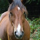 New Forest_Pony_Hampshire_England_UK by Kay Cunningham