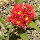Australian Native Plant_South Australia_Australia by Kay Cunningham