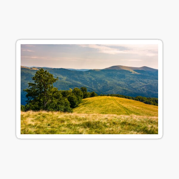 beech forests of Carpathian mountains Sticker