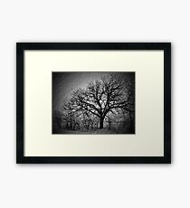 Old Timey Tree Framed Print
