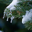 Winter's Tears by Pamela Hubbard