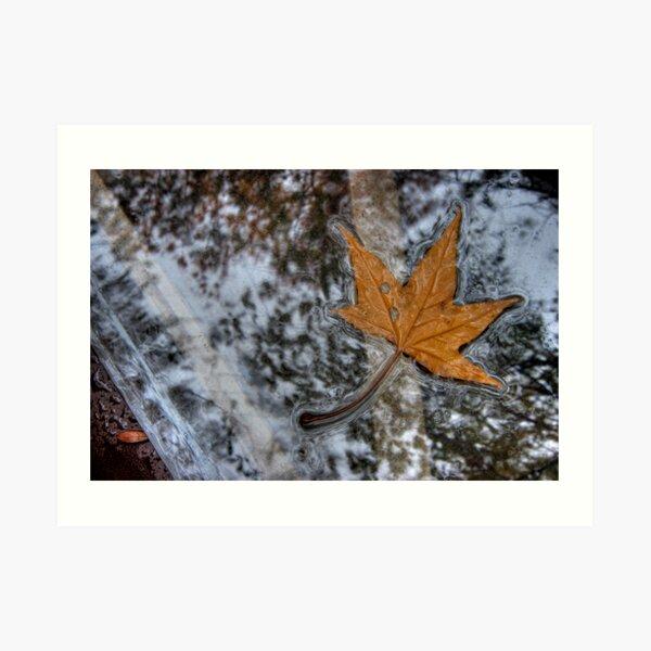 Table Leaf Art Print