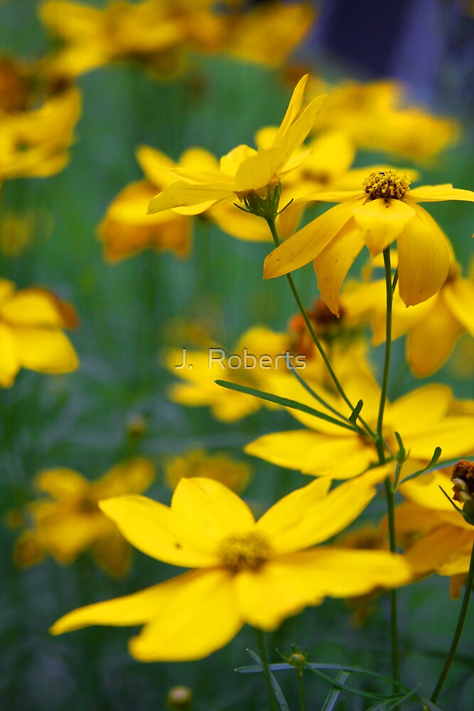 Golden Flowers by J.  Roberts
