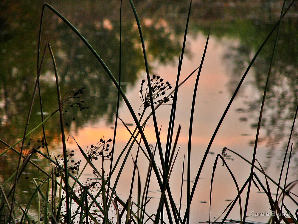 Reed by Carole Brunet