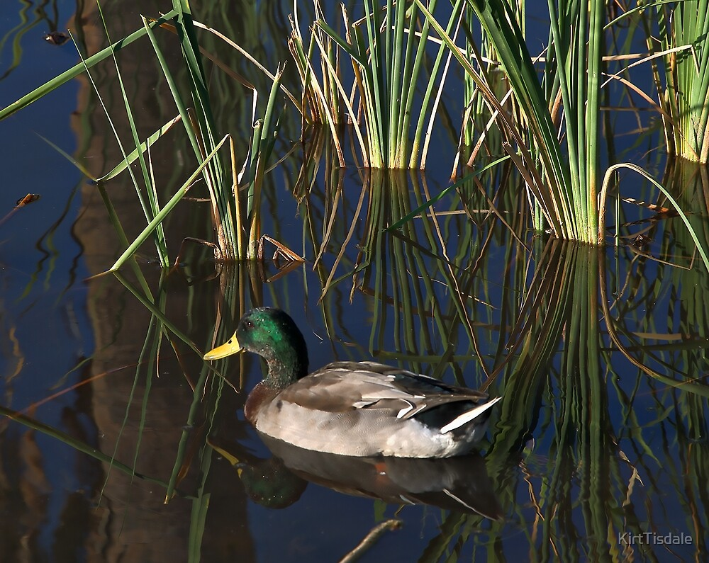 The Duck On The Pond At Papago Park by KirtTisdale
