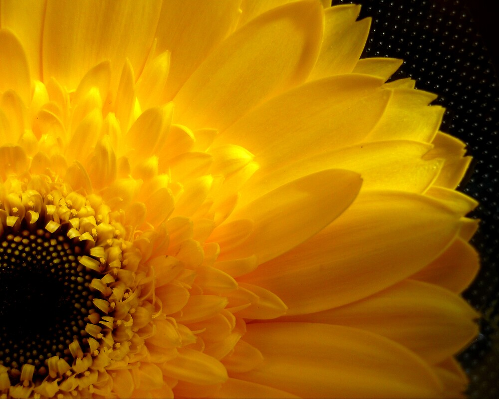 yellow by tbrose