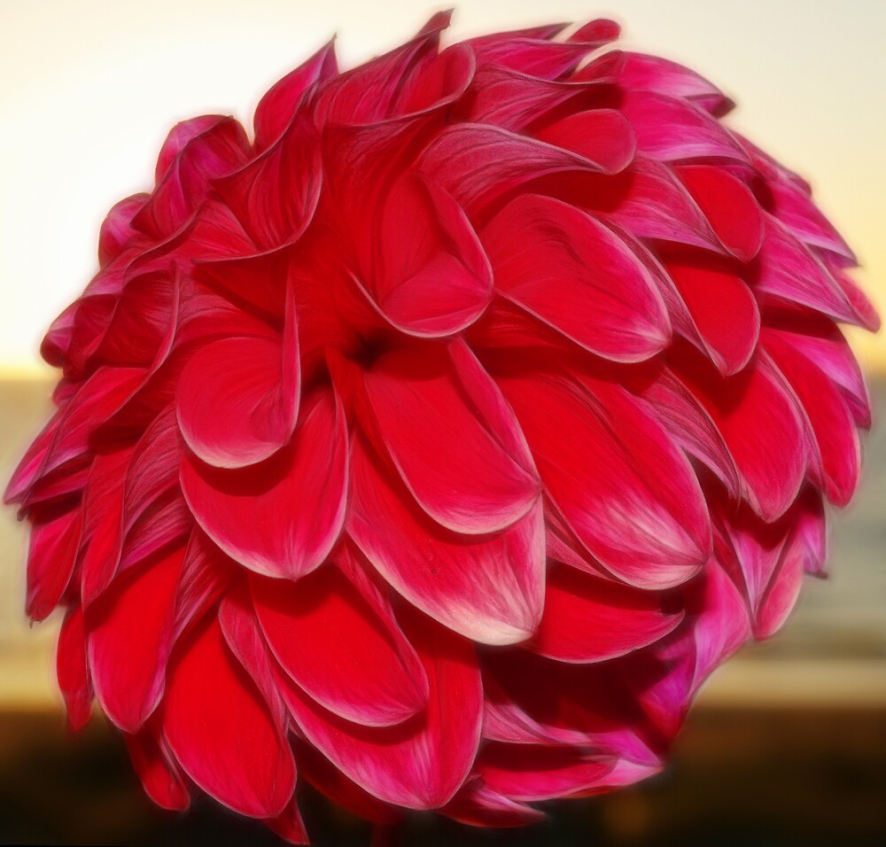 Ruby Red by JenniferW