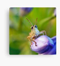 Bug Eyes Canvas Print