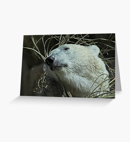Do You Like My New Grass Hat? Greeting Card