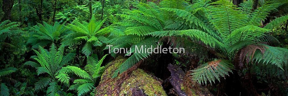 treefern heaven by Tony Middleton