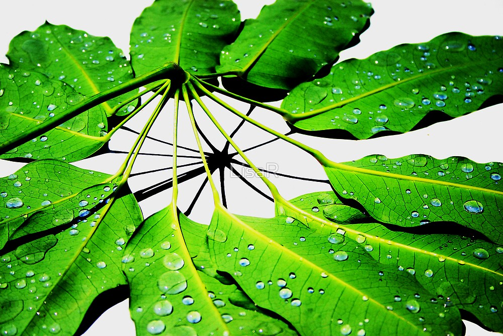 Nature's Umbrella by LisaR