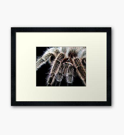 Hairy Framed Print