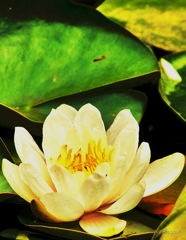 Lotus004 by ArtProphet