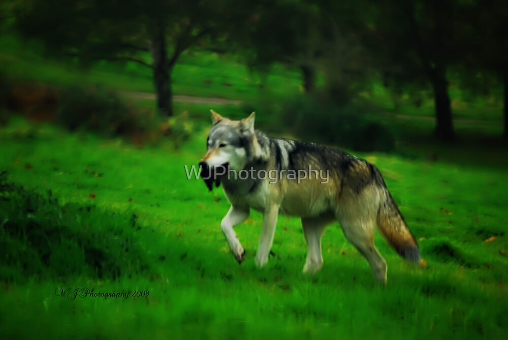 Wolf's Dinner~ by WJPhotography