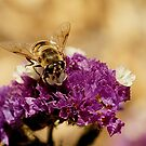 Bee by Debra LINKEVICS