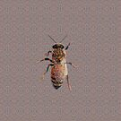 Worker Honey Bee 04 by Diego-t