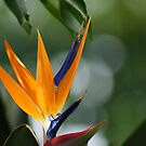 Parrot Flower by Neater