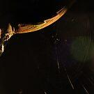 Night Spinner by Bryan Davidson