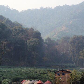 Hangzhou Tea Mountain by dennischoong