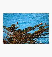 Colourful Characters Photographic Print