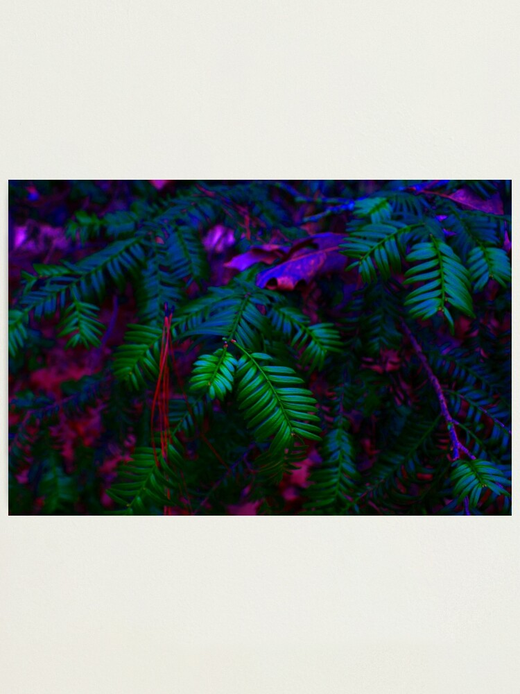 Vaporwave Plant Photographic Print By Sjsketches Redbubble