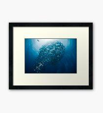 Lightbulb schooling fish Framed Print